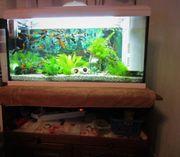 Aquarium 80L mit Fischen und
