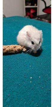 Käfig Hamster und Transport box