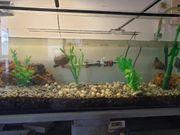 Wasserschildkröten mit Aquarium Zubehör