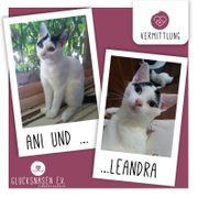 Kätzchen Ani und Leandra warten