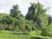 Pferdekoppel Ackerland alter Baumbestand 4