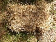 Weizenstroh kleine Ballen