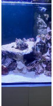 Auflösung Meerwasseraquarium