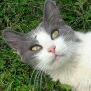 Kuschelige Katze Cosima sucht ihr