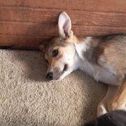 Tierschutzverein sucht DRINGEND Pflegestellen für