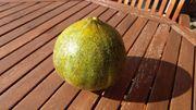 Ananas Honigmelone Samen sehr seltene