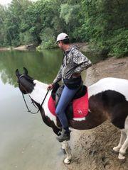Suche job im pferdestall