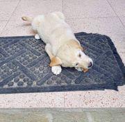 Maxi sucht seine Hundeeltern