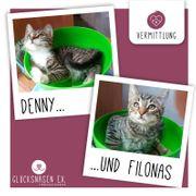 Kätzchen Denny und Filonas haben