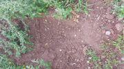 Erdaushub - Mutterboden