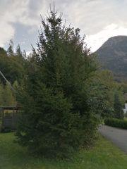 Baum gegen Fällung