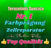 Teraselmis Suecica Plankton- Phytoplankton