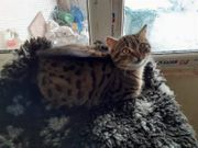 Katzenmädchen Puncti 04 19 sucht