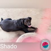 Shado - Lernwilliger verspielter Rüde sucht
