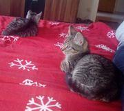 Kitten suchen ein schönes Zuhause