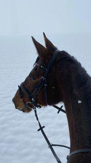 Pferd sucht Reiter in
