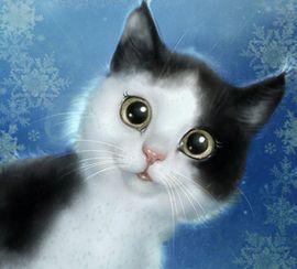 Suche ein Kätzchen / oder Katze bzw. Kater auch erwachsen