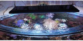 Fische, Aquaristik - Meerwasseraquarium 800L