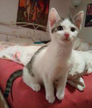 Süßes Kätzchen und Katerchen 12