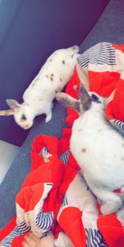 2 Kaninchen zu verkaufen