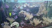 großes Seewasser-Aquarium 120x60x60 cm ca