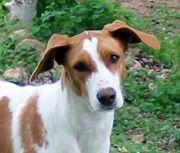 Prachtkerl Guapo-aktiver Traumhund