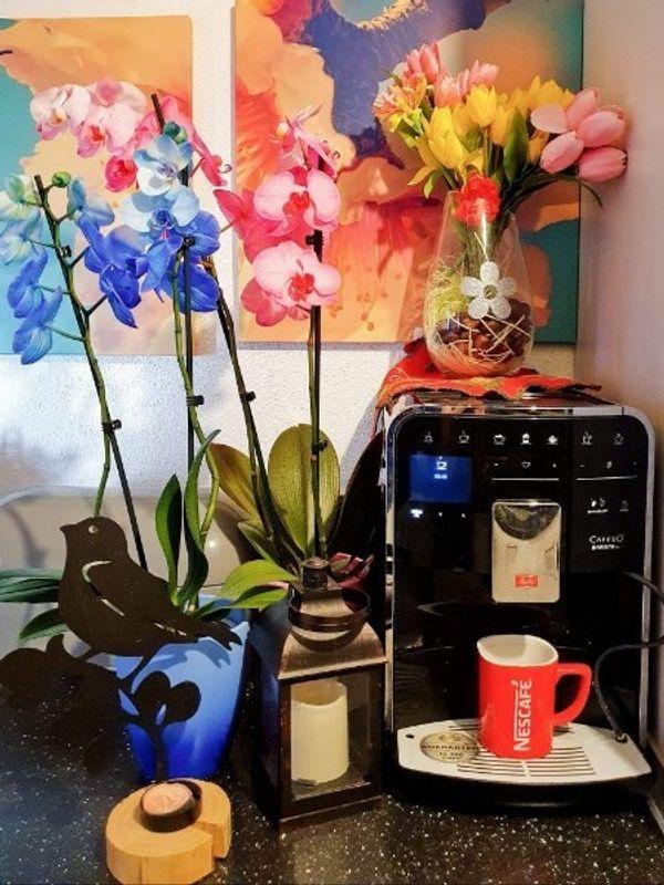 Melitta Kaffeevollautomat Melitta CAFFEO Barista