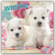 suche West Highland White Terrier