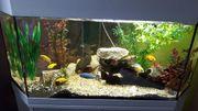 Eck aquarium komplett mit allem