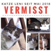 Vermisst entlaufen suche Katze Leni