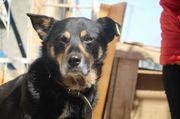 Tierschutzhund Dexter
