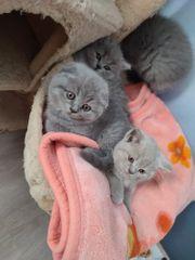 wunderschöne Kitten nurnoch 2 da