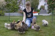 Reinrassige Zwergseidenhühner Jungtiere Küken und