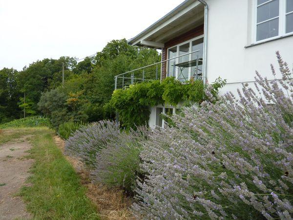 Gesucht Freundliches Zuhause im Grünen