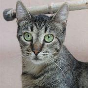 Katzenjunge Amando möchte Deine Welt