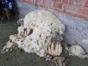 Rohwolle zu verkaufen