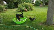 Tierliebhaber unterstützt Hundebesitzer