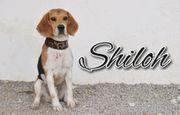 Shiloh möchte seine Vergangenheit nur