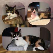 Katze Minna 5 5 Monate