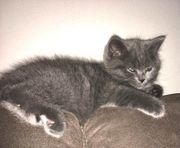Ich suche eine Baby Katze