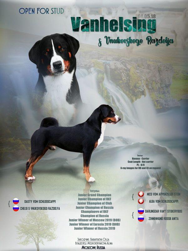 Appenzeller Sennenhund Welpen In Frankenau Hunde Kaufen Und