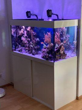 Fische, Aquaristik - Meeresaquarium komplett