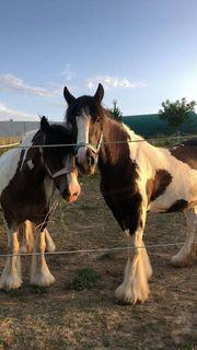 Pflegebeteiligung Pferd such Mensch