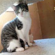 Kätzchen Minou möchte sich in