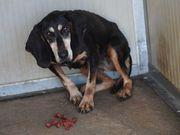 Lola sucht ihr Zuhause