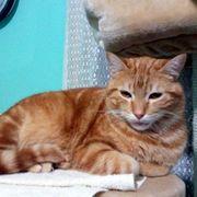 Katzenbub Ginger sucht seine Menschen