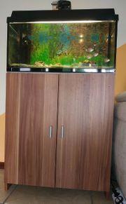 Aquarium 60 Cm mit Fische