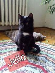 Jella sucht tolles Zuhause mit
