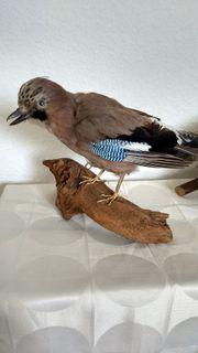 Vögelpräparate Konvolut ausgestopft Präparat