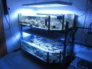 Osmosewasser für Meerwassaquarium Aquarium Salzwasser